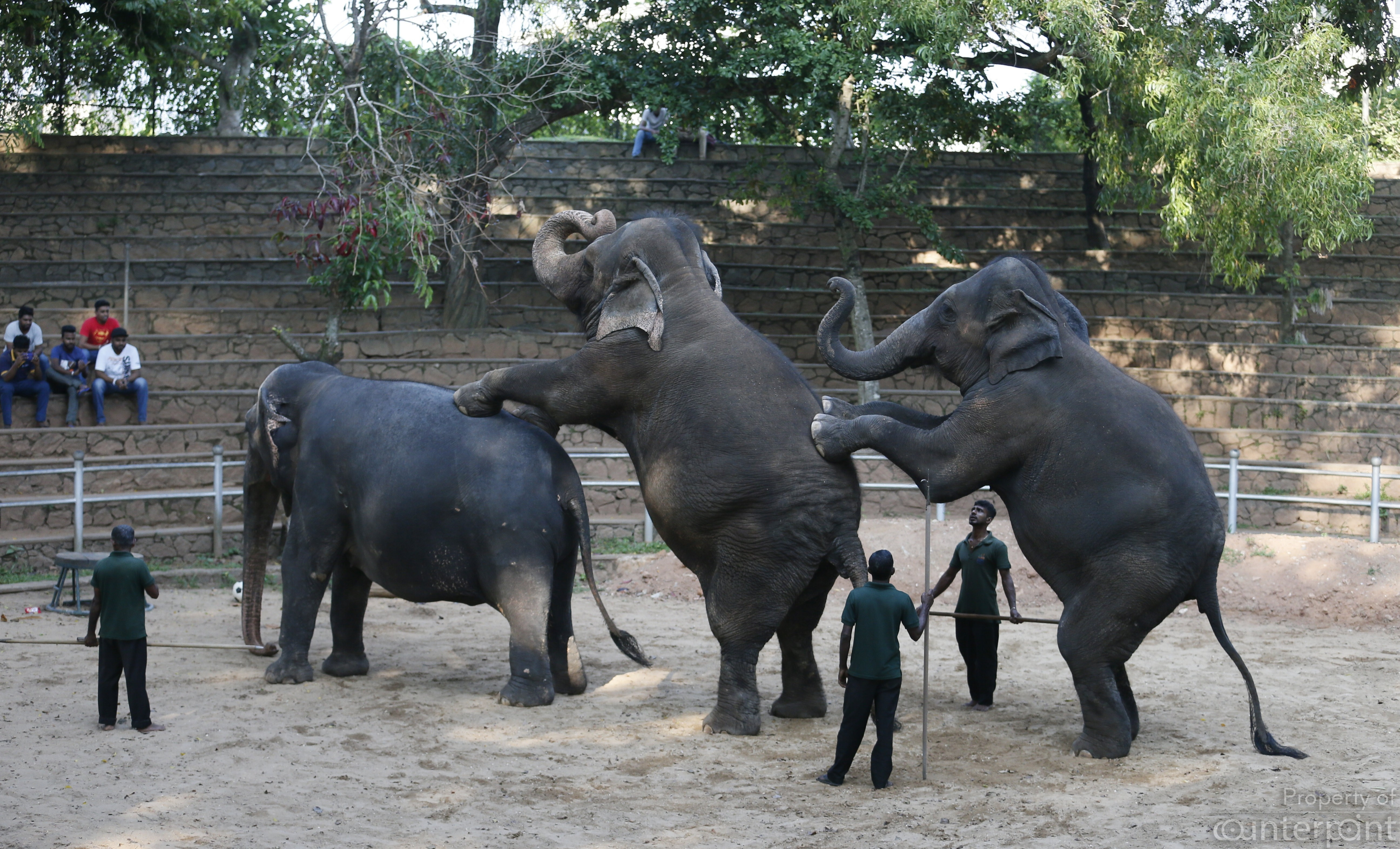 At the Dehiwala Zoo, There's a need for better animal care