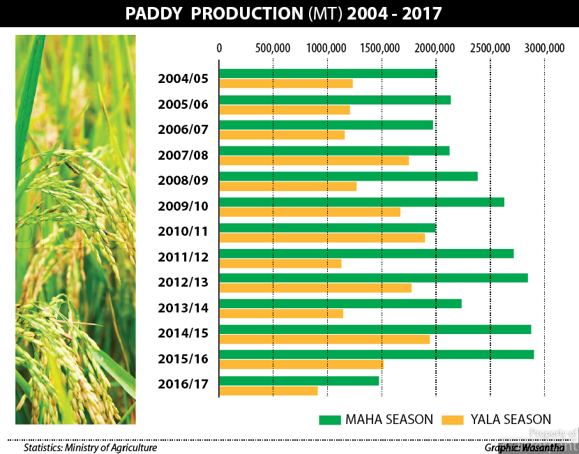 Paddy production