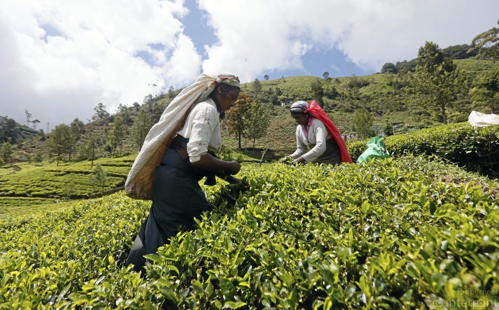 Ceylon Tea is world renown and a key foreign exchange earner. However, it is time Sri Lanka diversified into other non-traditional sectors.