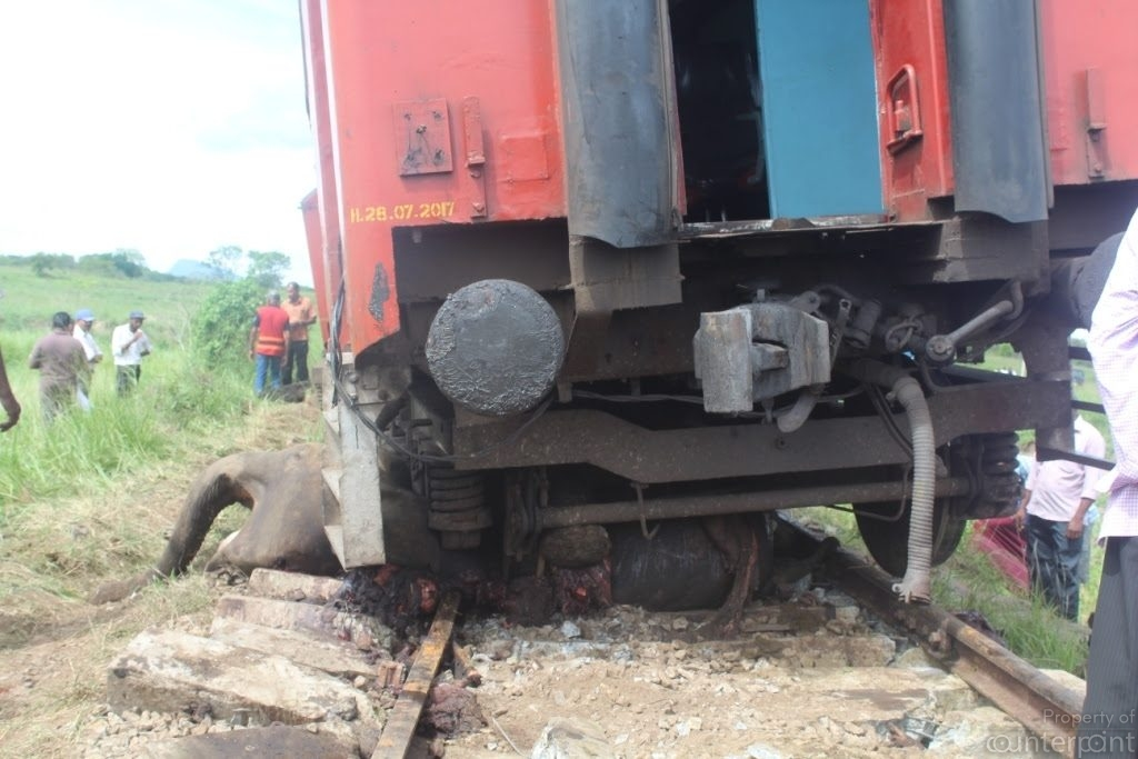 Trains must travel slowly through areas known to be frequented by elephants. (photo credit- Sri Lanka Wildlife Conservation Society)