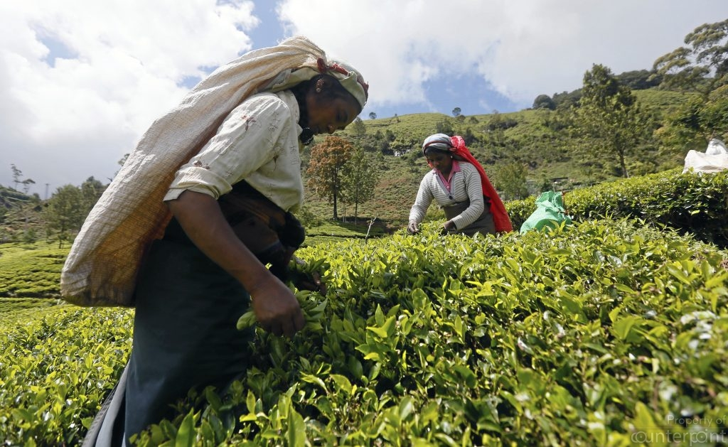 The Estate sector has been agitating that their daily wage be increased to Rs.1000 which the private sector Tea Estate owners have been resisting. The current crisis will severely affect private sector investments too and have a negative impact on the economy.