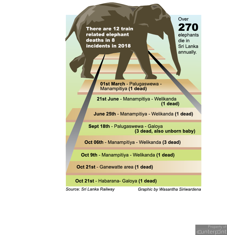 Twelve elephants were killed by trains this year, nine of them between September and October.