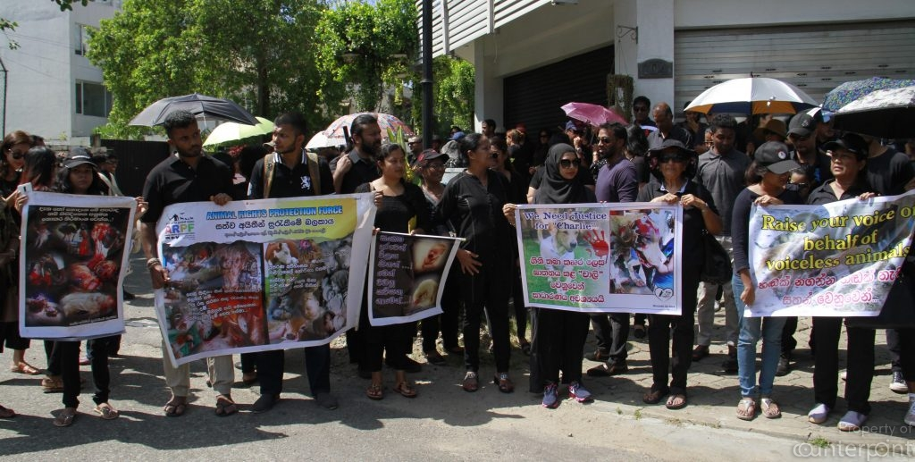Charlie's inhuman death sent shock waves amongst animal lovers and others alike. A petition calling upon the leaders of the country, to hasten the passing and implementation of the updated Animal Rights Bill was circulated, while many gathered outside the Prime Ministers office to protest Charlie's death and the delay in getting the Bill passed.