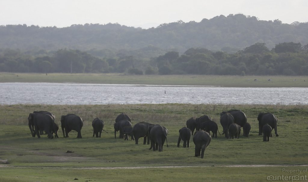 There's much in terms of Wild life that Sri Lanka can offer.