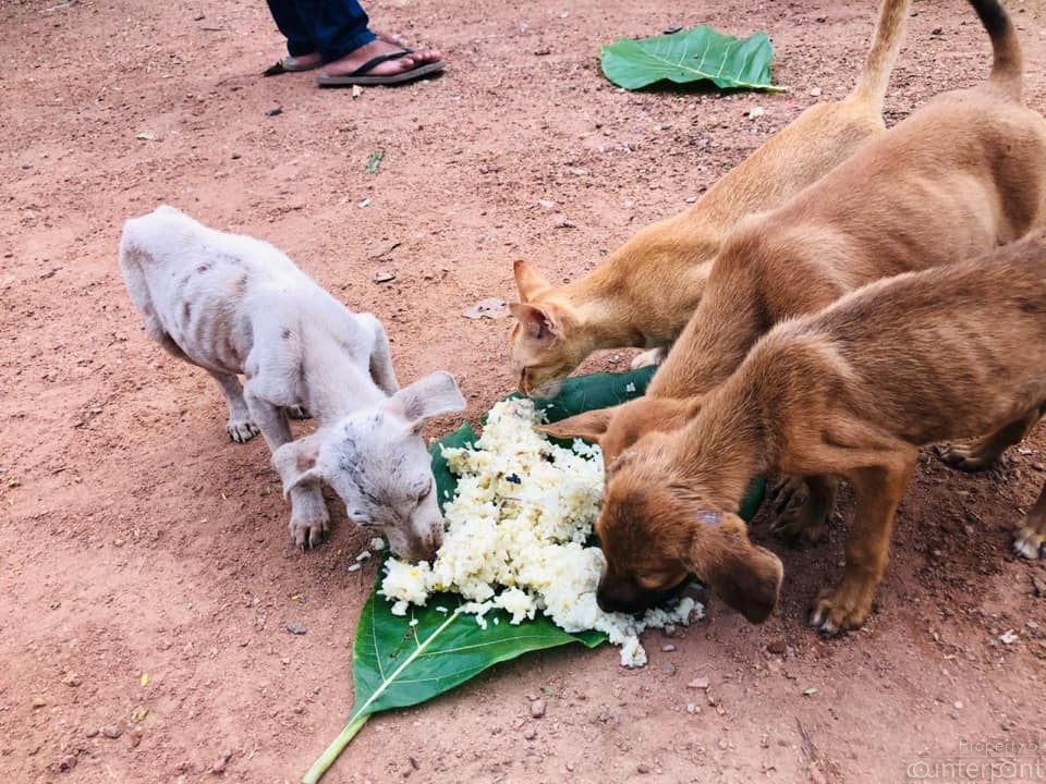 Rally for Animal Rights and Environment (RARE) was one group that fed stray cats and dogs when the country was under curfew.(Courtesy RARE)
