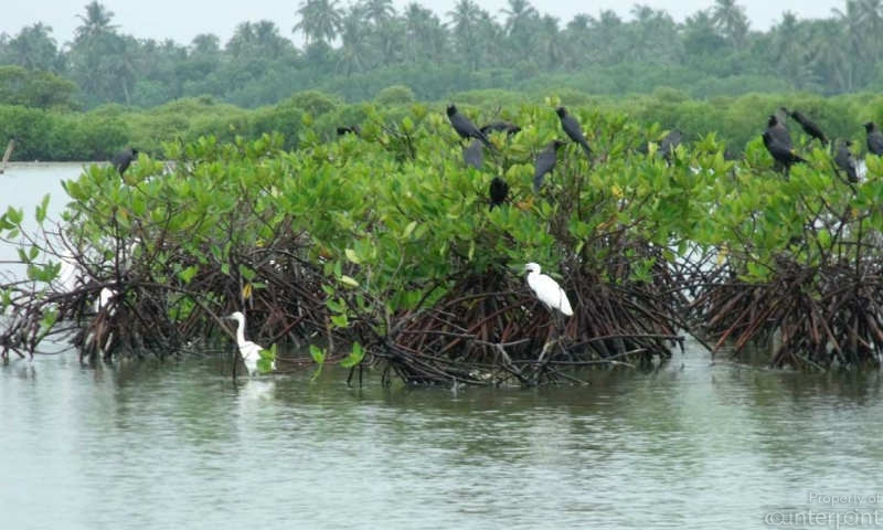 courtesy Biodiversity Sri Lanka